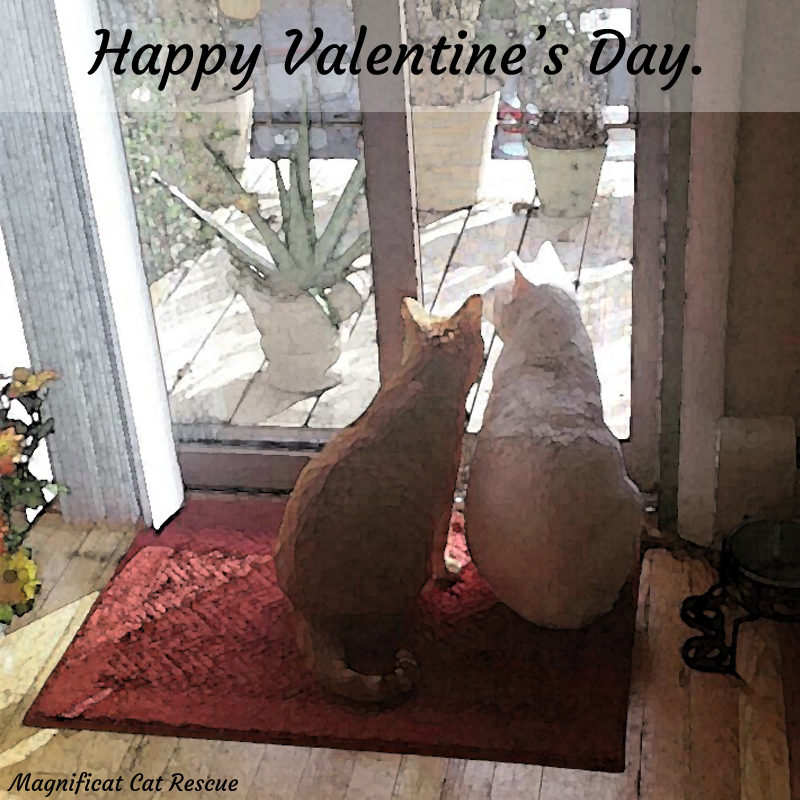 Magnificat Cat Rescue And Rehoming